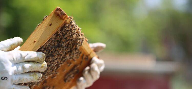 Iniziative a sostegno dell'apicoltura: alcune informazioni utili