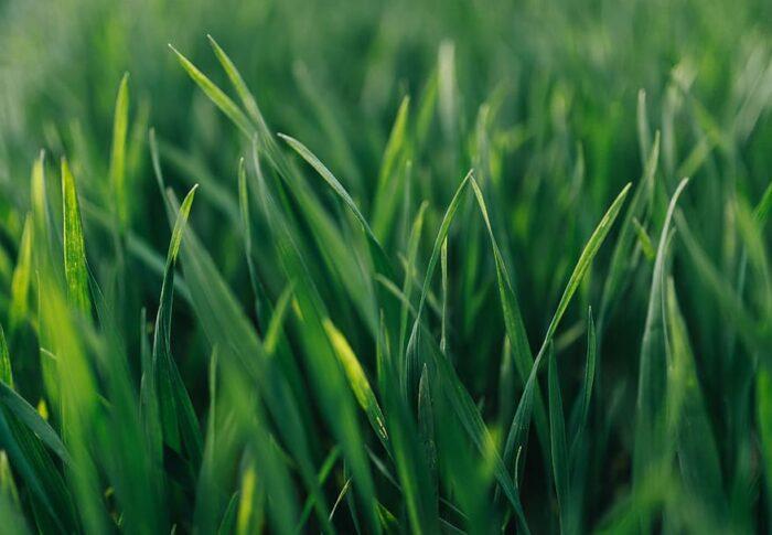 Protocollo regionale sugli acquisti verdi