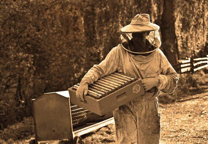 Contributi agli investimenti per apicoltura
